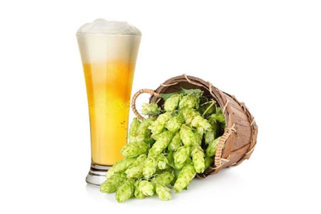 Serra Catarinense, óasis do lúpulo, cria cerveja colaborativa