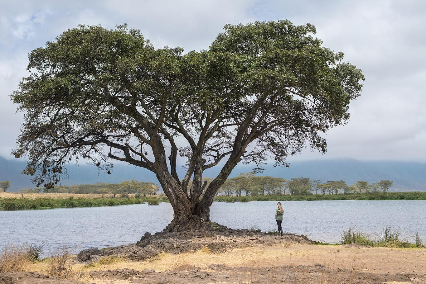 Tanzânia - Ngorongoro
