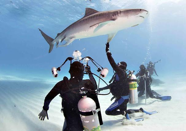 No mar, lado a lado com tubarões