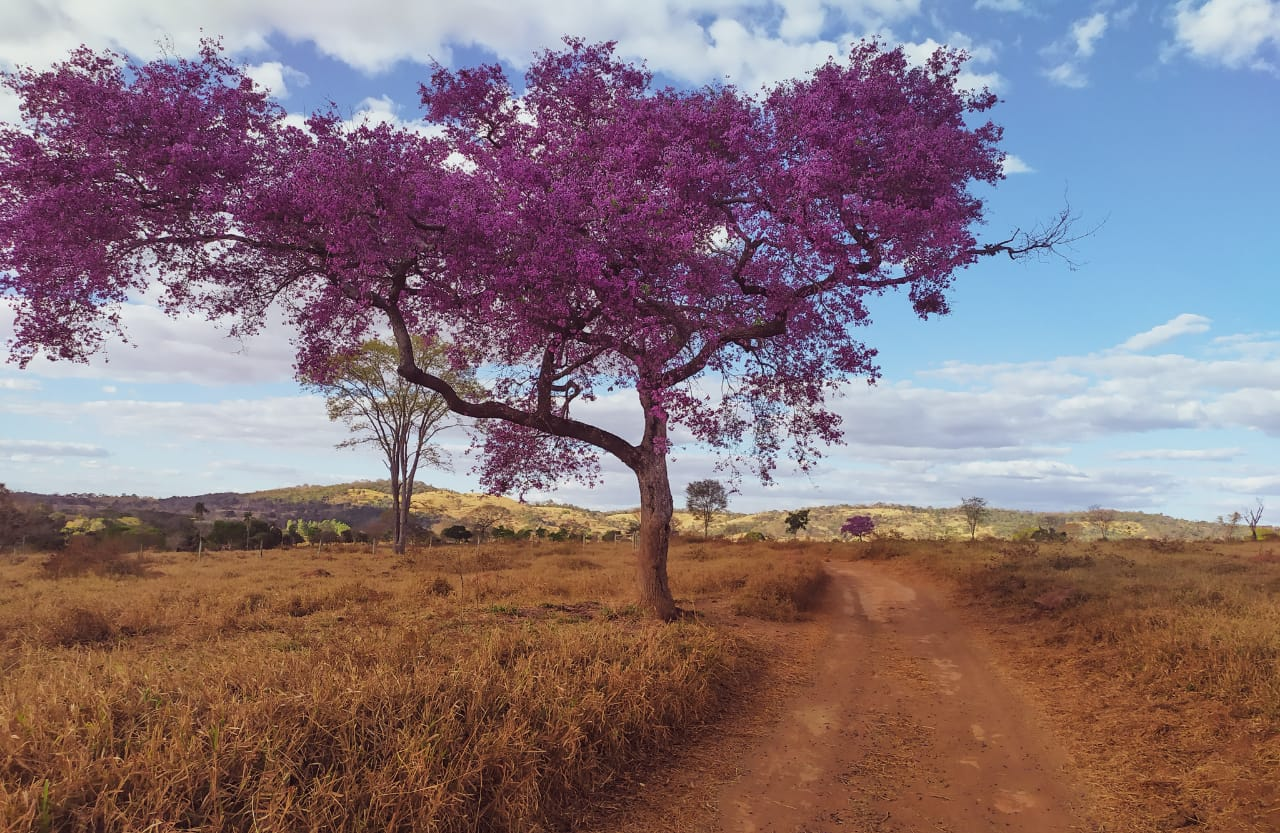 Caminho de Cora Coralina, 300 km de trilhas na natureza