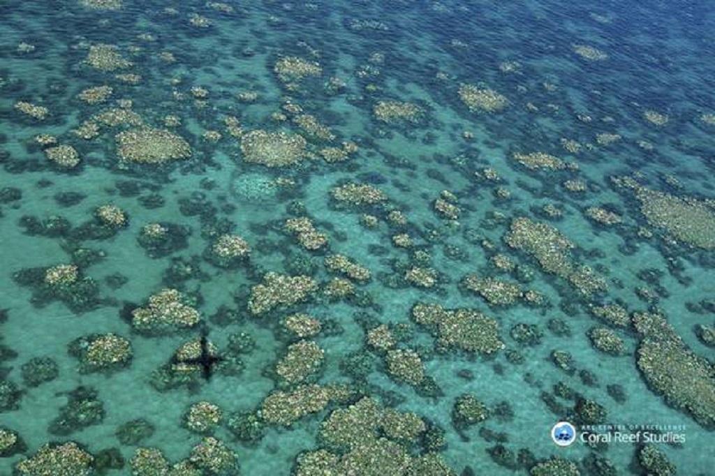 Barreira dos Corais, na Austrália, diminuiu 50% em 30 anos