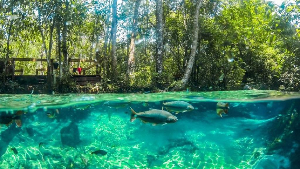 Começa temporada de pesca em Mato Grosso