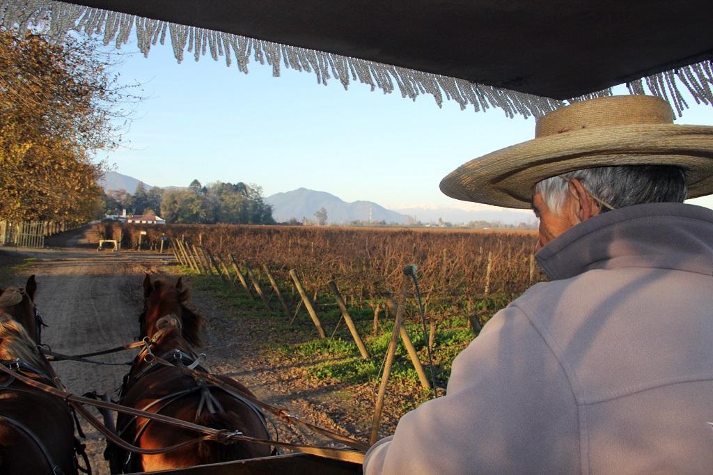 Vinícolas do Chile