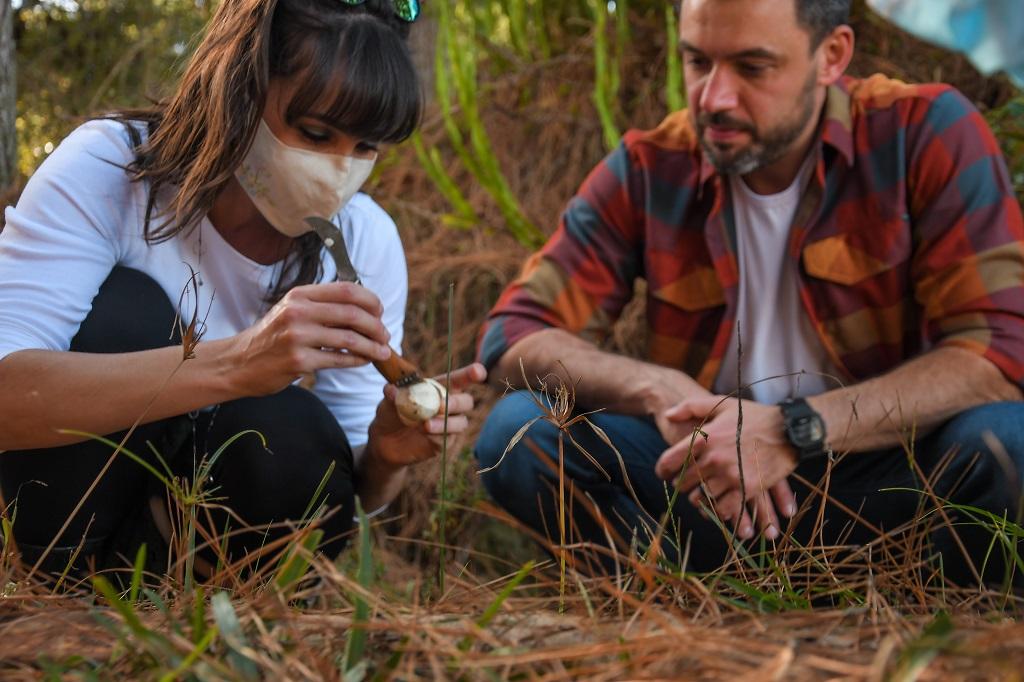 Programe sua próxima aventura: caçar cogumelos