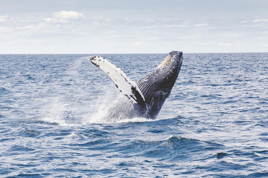 Prado, destino para observar baleias jubarte