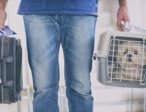 Brasileiros querem viajar com seus pets