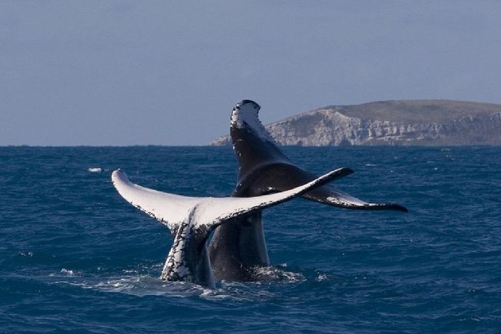 Três Estados para fazer turismo de observação de baleias